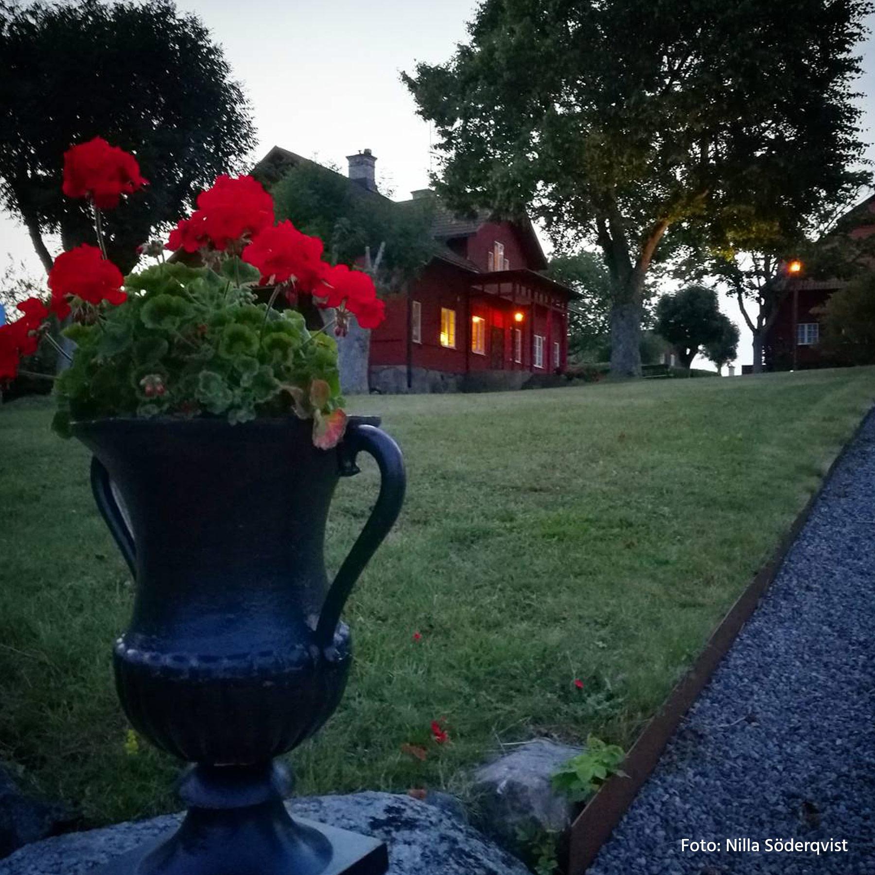 Väder i skärgården - Ornö - Säby gård - röda rosor